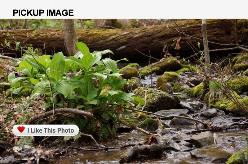 Screenshot: pickupimage.com