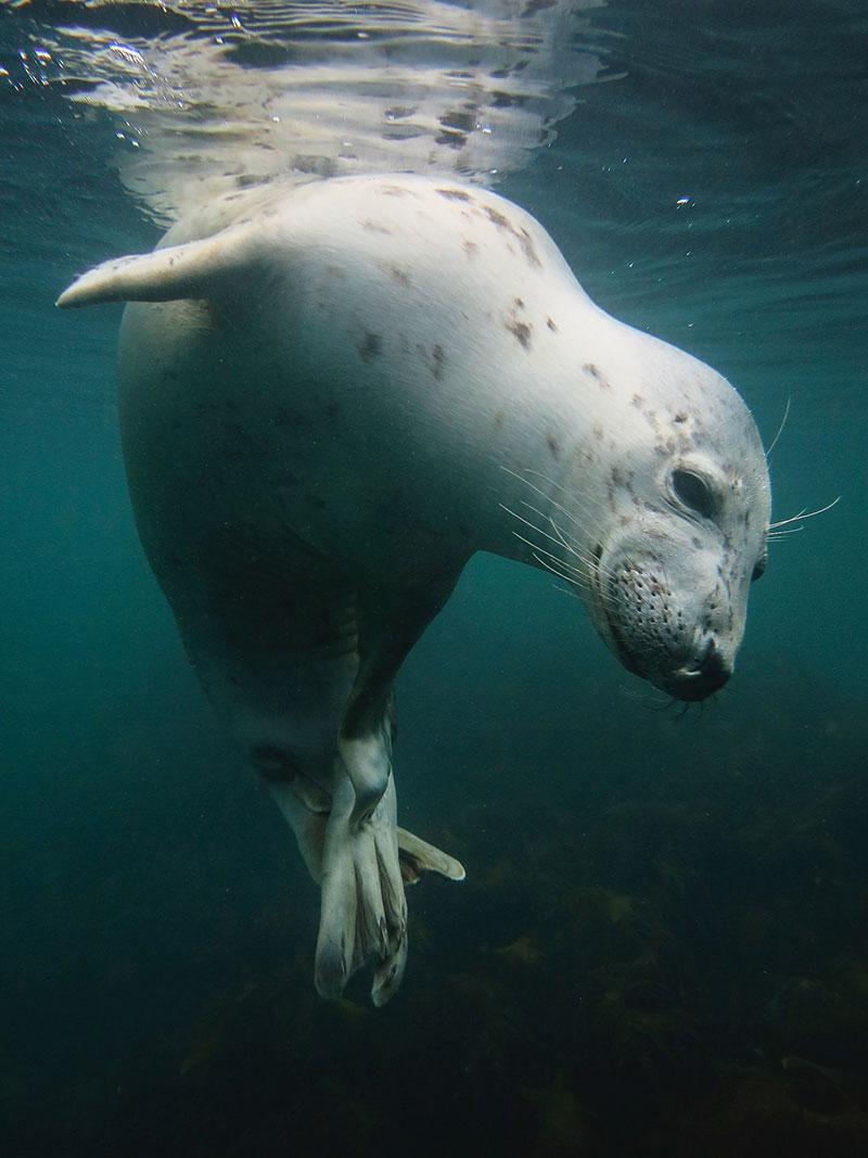 Vicky Paynter/UPY2018: 'Scratchy Seal'