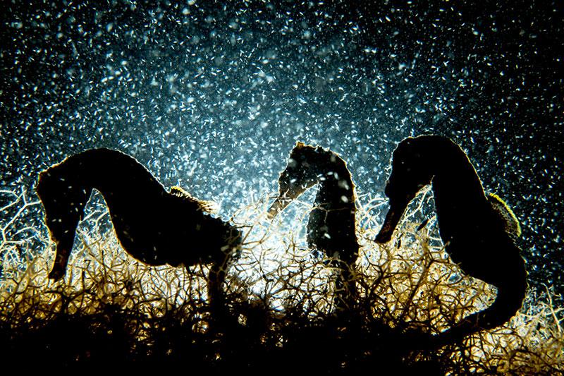 Shane Gross/UPY2018: 'Seahorse Density'