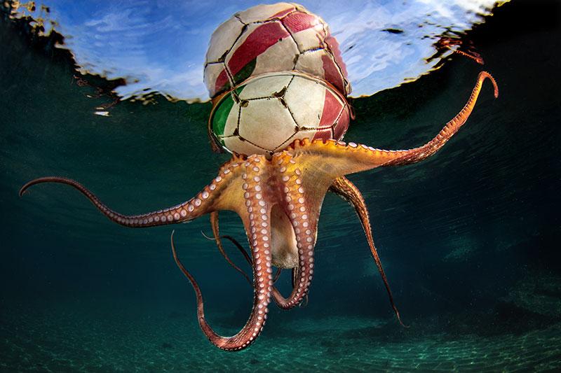 "© Pasquale Vassallo/UPY2020: ""Octopus Training"", 1. Platz in der Kategorie ""Verhalten"""