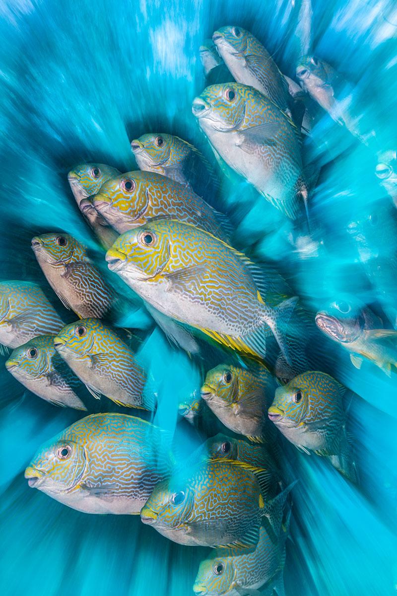 """© Nicholas More/UPY2020: """"Rabbit Fish Zoom Blur"""", ausgezeichnet als """"British Underwater Photographer of the Year 2020"""""""
