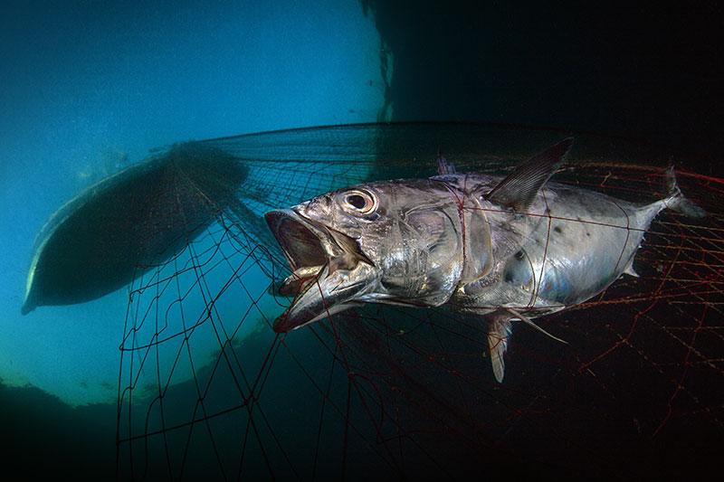 """© Pasquale Vassallo/UPY2020: """"Last Dawn, Last Gasp"""", ausgezeichnet als """"Marine Conservation Photographer of the Year 2020"""""""