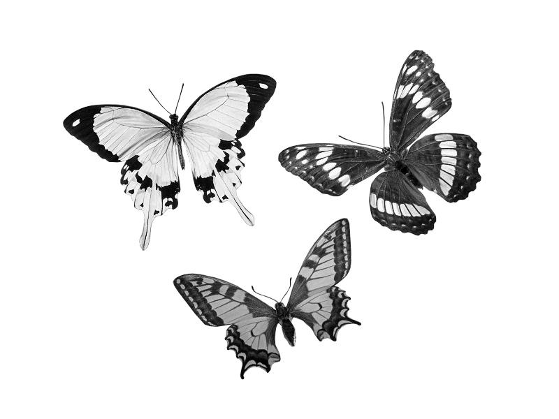 Schwarz-Weiß-Umwandlung