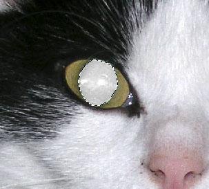 Die entfärbte Pupille