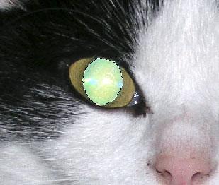 Die markierte Pupille
