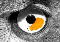 Das Auge wieder freipinseln