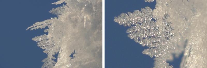 Das linke Bild wurde mit maximalem Optischen Zoom und Nahlinse gemacht, das rechte mit zusätzlichem 3-fach-Digitalzoom. Hier ist ein deutlicher Qualitätsverlust zu erkennen.