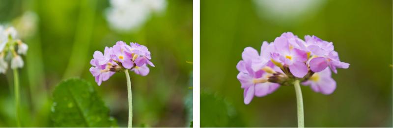 Das linke Bild wurde mit 200m Brennweite mit einem Nikon 70-200 F2,8 VR gemacht, das rechte vom gleichen Standpunkt mit zusätzlichen 1,7-fach Telekonverter, also 340mm Brennweite.