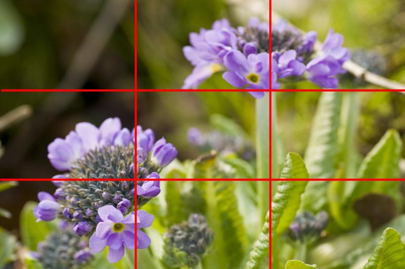 Dieses Bild erfüllt die Drittelregel nahezu perfekt. Die beiden Blüten liegen in den Schnittpunkten und der Stängel der rechten Blüte liegt exakt auf einer senkrechten Hilfslinie