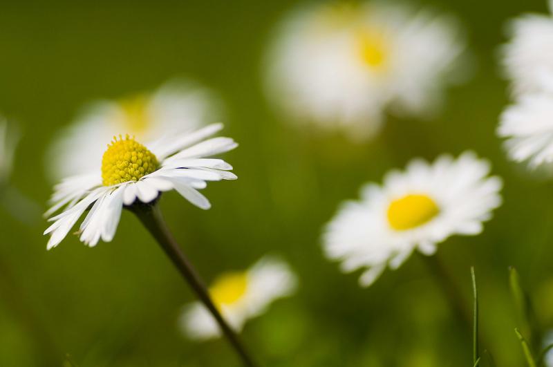 Geht man etwas näher heran, stellt sich aber schon die Frage, ob nicht eine einzige Blüte in den Mittelpunkt gerückt werden sollte?
