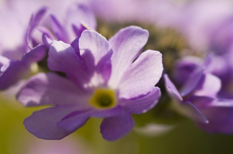 Wünschenswert wäre hier sicherlich, dass die Blütenblätter und der Kelch scharf wären.