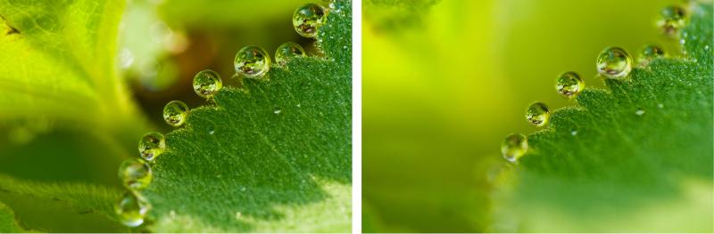Das linke Bild hat durch Blende 32 mit Raynox MSN-202 an einem 105-mm-Objektiv eine maximal mögliche Schärfentiefe, viele Tropfen sind scharf, aber der Hintergrund eher unruhig. Beim rechten Bild mit Blende 2,8 ist der Hintergrund sehr schön ruhig, dafür sind nur wenige Tropfen scharf