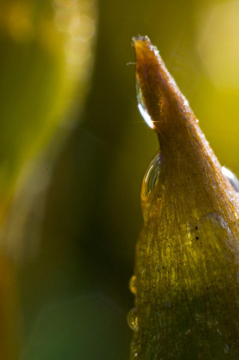 Mit 20-mm-Objektiv in Retrostellung fotografiert sehen Sie sogar feinste Details in der Oberfläche der Sporenkapsel, hier aufgenommen mit Blende 16. Abbildungsmaßstab ca. 3,6:1
