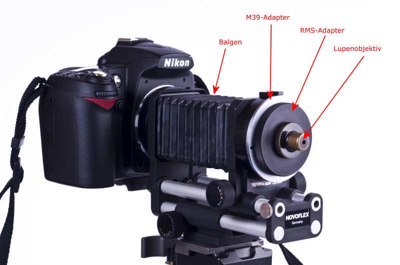Lupenobjektiv mit RMS-Adapter und M39-Adapter am Balgen montiert