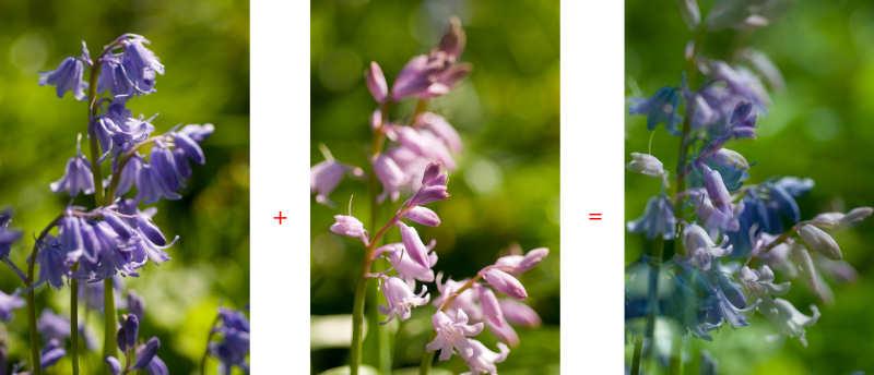 Mit der Doppelbelichtungsfunktion der Nikon D300 entstand im Ergebnis das rechte Bild, für das zwei Einzelbilder (links und mittig) gemacht und von der Kamera vereinigt wurden.