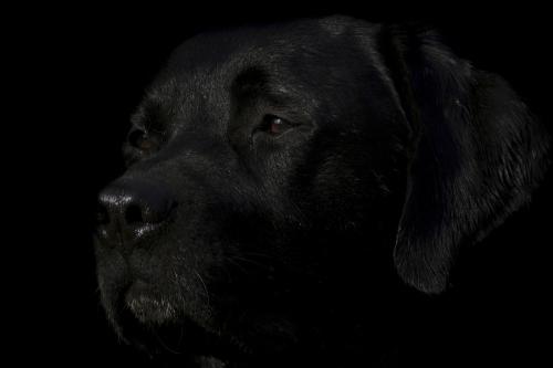 Hier wurde einfach ein unterbelichtetes Bild auf einem schwarzen Hintergrund freigestellt. Das ist nicht wirklich eine gute Lowkey-Aufnahme, denn dem Bild fehlt der harte Kontrast zwischen Licht und Schatten.