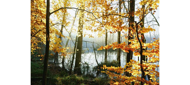 Herbstimpressionen und Erdpyramiden