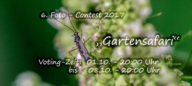Voting Foto-Contest