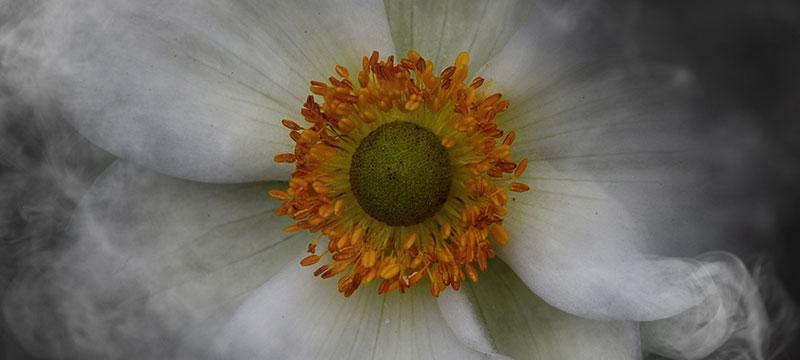 Eindrucksvolle Blumenbilder – Bettina Güber über ihr Spezialgebiet der Blumenfotografie