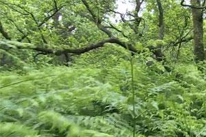 Ein Survival-Video-Abenteuer