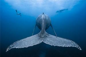 Ausgezeichnete Unterwasser-Aufnahmen 2019